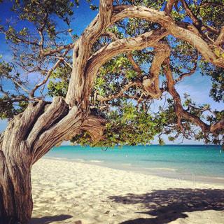 ビーチの木の写真・画像素材[1300163]
