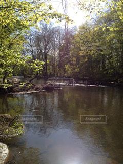 木々 に囲まれた川の写真・画像素材[1325101]