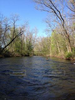 木々 に囲まれた川の写真・画像素材[1325103]