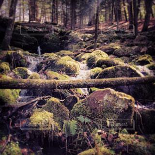 森の中の大きな滝の写真・画像素材[1325113]