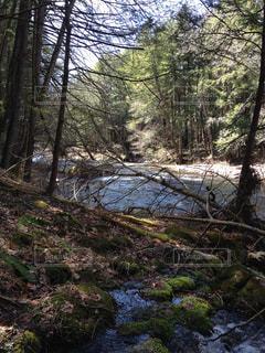 雑木林を流れる川の写真・画像素材[1325115]