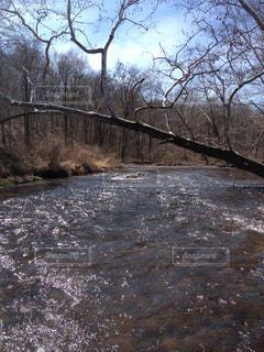 森を流れる川の写真・画像素材[1325121]