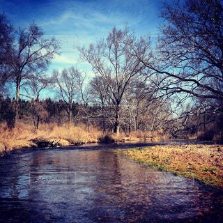 冬の川の写真・画像素材[1325122]