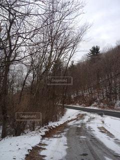 雪に覆われた道の写真・画像素材[1326318]