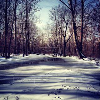 雪に覆われた森の写真・画像素材[1326321]