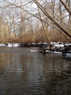 冬のフライフィッシングの写真・画像素材[1326339]