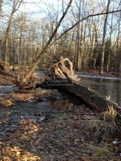 森を流れる川の写真・画像素材[1326342]