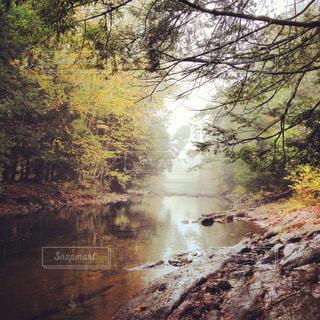 川と木々の写真・画像素材[1326368]