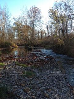 川と森の写真・画像素材[1326372]