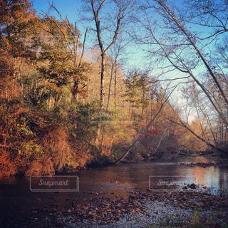 森を流れる川の写真・画像素材[1326373]