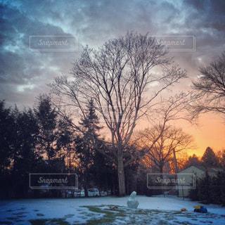 夕暮れの裏庭の写真・画像素材[1326474]