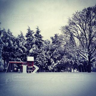 庭の雪の写真・画像素材[1326475]