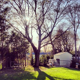 春の庭の写真・画像素材[1326482]