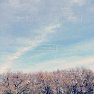 木と空の写真・画像素材[1326485]