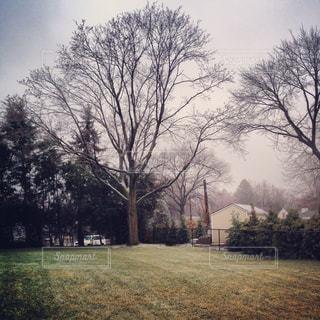 庭の木の写真・画像素材[1326675]