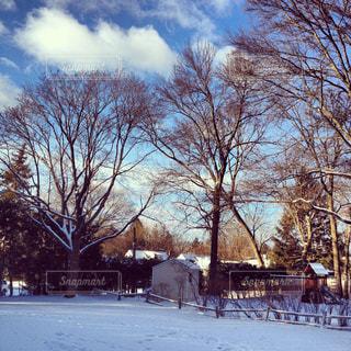 地面の雪の木の写真・画像素材[1328080]