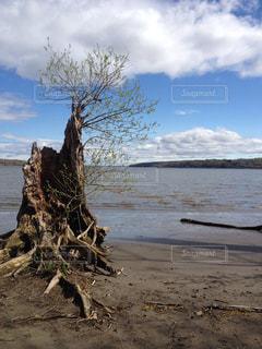 木の写真・画像素材[1328730]
