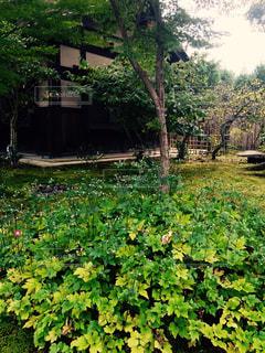 緑豊かな森の近くの写真・画像素材[3179130]