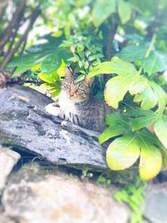 天使な猫の写真・画像素材[1379231]