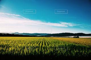 田舎の田んぼの写真・画像素材[2302864]