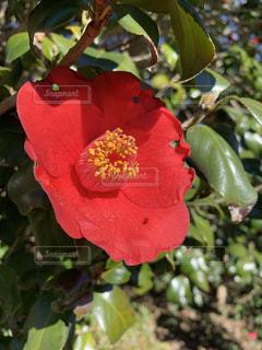近くの花のアップの写真・画像素材[1775753]