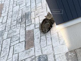 猫の写真・画像素材[4536273]