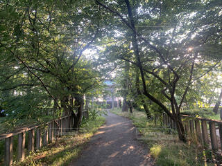 木の隣にあるベンチの写真・画像素材[4541653]