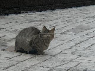 野良猫の写真・画像素材[4554857]