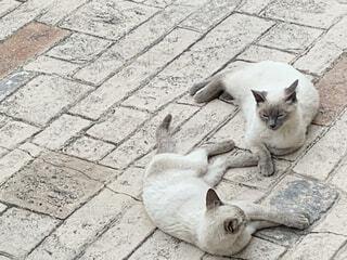 ネコ団欒の写真・画像素材[4557876]