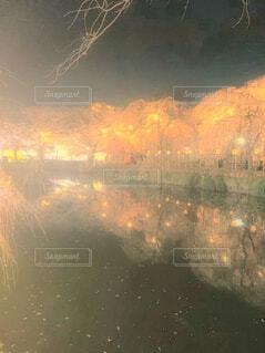 桜の名所の写真・画像素材[4559269]