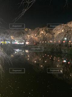 桜の名所の写真・画像素材[4559265]