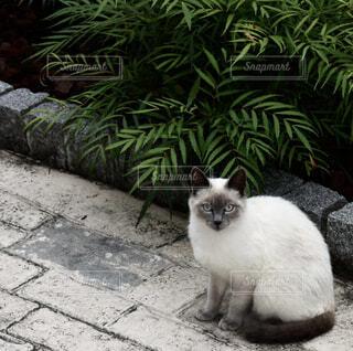 庭に座っている猫の写真・画像素材[4606186]