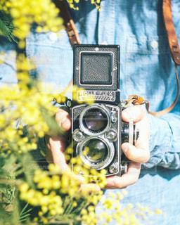 ミモザとフィルムカメラの写真・画像素材[1297032]