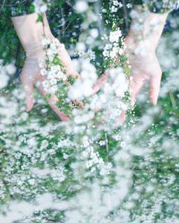 花と手の写真・画像素材[1297037]