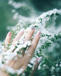 花と手の写真・画像素材[1297040]