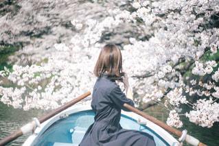 ボートでお花見の写真・画像素材[1297045]