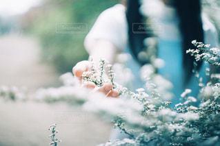 花と手の写真・画像素材[1297050]
