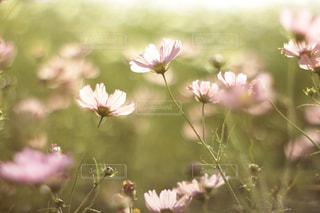 花のクローズアップの写真・画像素材[2502942]