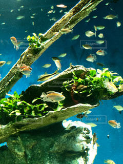 魚と樹木の写真・画像素材[2361812]