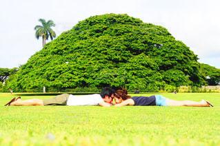 壮大な木の下での写真・画像素材[1299868]