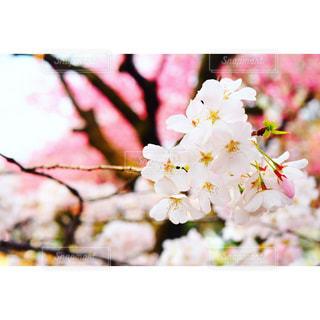 近くの花のアップの写真・画像素材[1325281]