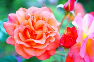 近くの花のアップの写真・画像素材[1325282]
