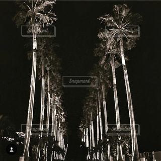 夜景の写真・画像素材[1351482]