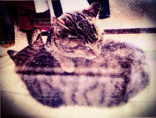 動物の写真・画像素材[1351488]