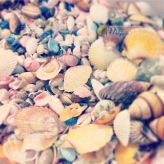 海の写真・画像素材[1351489]