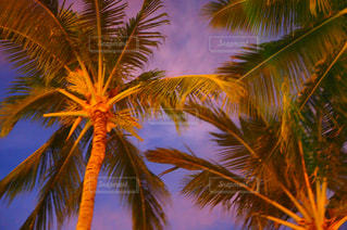 ヤシの木とビーチの写真・画像素材[1353889]