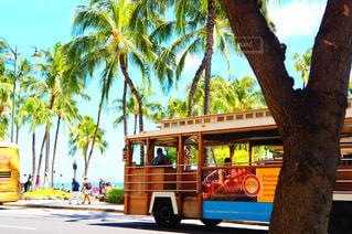 ヤシの木の横の通りを運転する黄色バスの写真・画像素材[1353899]