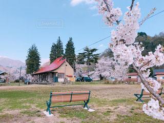 公園のベンチの写真・画像素材[1298934]