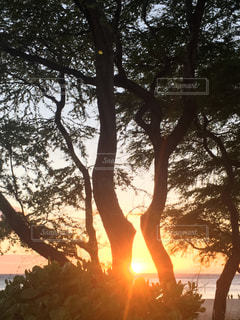 meoto treeの写真・画像素材[832163]