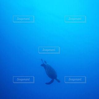 亀と海の写真・画像素材[1175727]